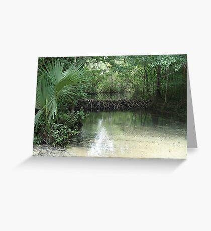Beaver Dam and Pond on Econfina Creek Greeting Card