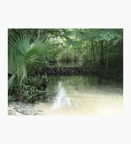 Beaver Dam and Pond on Econfina Creek Photographic Print