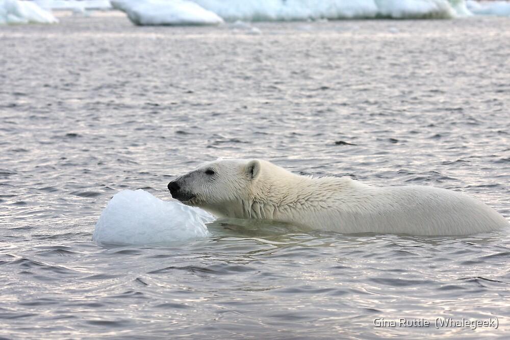 Polar Bear Dip by Gina Ruttle  (Whalegeek)