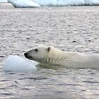 Polar Bear Dip by Gina Ruttle  (Whalegeek)