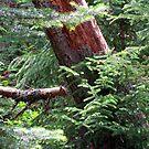 Forest Magic by Jan Landers