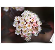 Tiny Delicate Blossoms Poster