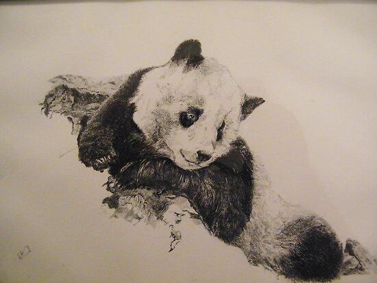 Panda by Dave  Butcher