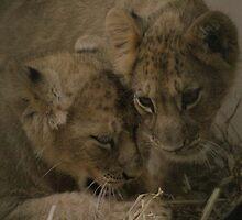 Lion Cubs by Franco De Luca Calce
