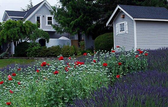 Farmhouse at Jardin du Soleil Lavender Farm by Marjorie Wallace