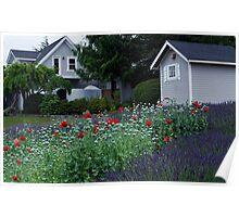 Farmhouse at Jardin du Soleil Lavender Farm Poster