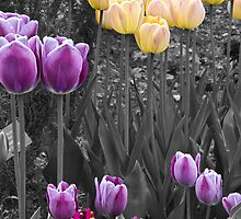 Tulips  by TomWagner