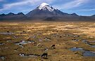 Sajama by Syd Winer
