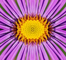 Flower Power by Janette  Dengo