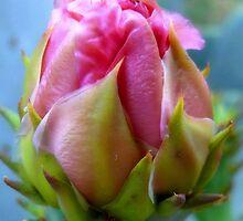 A Prickly Pear Flower Bud  3 by Carla Jensen
