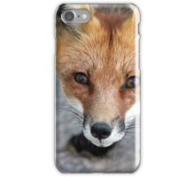 Please Feed Me - Red Fox iPhone Case/Skin