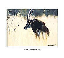 Limited Edition Prints - Fauna Photographic Print