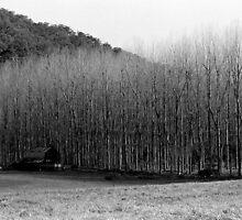 Winter's Day - Colo 1 by JennyMac