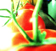 Tomato Line Up by mjgould