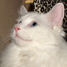 A Friends Cat called Ricky by AnnDixon