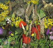 weeds from Sewerby cliff - July by Margaret Hockney