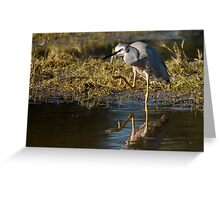 White-faced Blue Heron Greeting Card