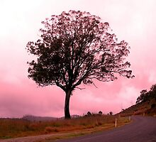 Pink Dawn in Little Hartley by Cassy Hodge
