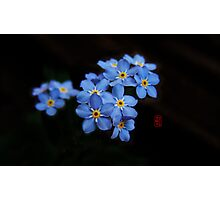 Forget me not.... Photographic Print
