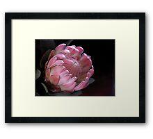 Pink Protea Framed Print