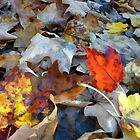 Vermont Fallen Leaves by Jerry Deutsch