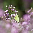Green Butterfly by Tanya Small
