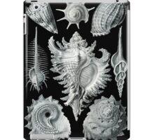 Haeckel Prosobranchia Sea Shells iPad Case/Skin
