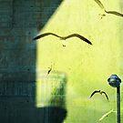 City shadow by Silvia Ganora