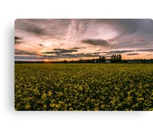Sunset over Rapeseed.  Canvas Print