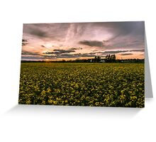 Sunset over Rapeseed.  Greeting Card