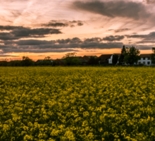 Sunset over Rapeseed.  Sticker