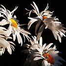 Flutter. by James Ingham