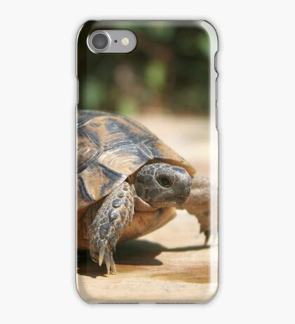 Portrait of a Young Wild Tortoise iPhone Case/Skin