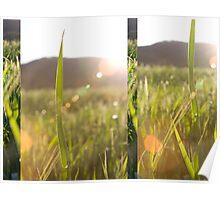 Grasses.. Poster