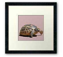 Portrait of a Young Wild Tortoise Isolated Framed Print