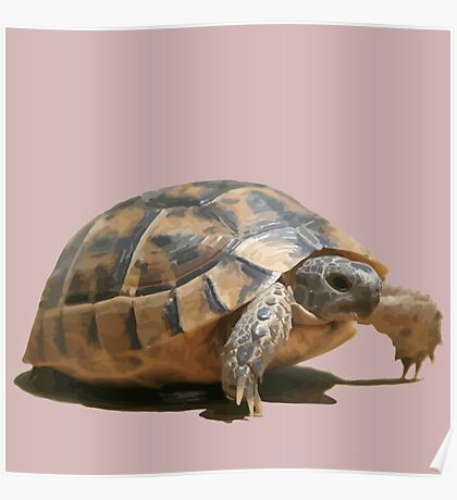 Portrait of a Young Wild Tortoise Isolated Poster