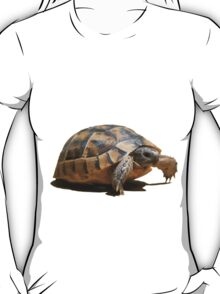 Portrait of a Young Wild Tortoise Isolated T-Shirt