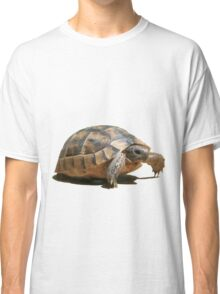 Portrait of a Young Wild Tortoise Isolated Classic T-Shirt