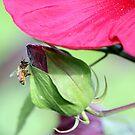 Pollen Catcher by rasnidreamer