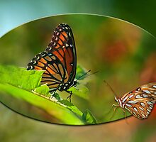 Butterfly Buddies by Bonnie T.  Barry
