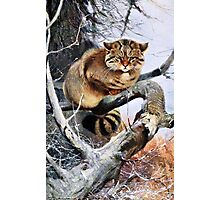 Wildcat Vintage Artwork Photographic Print