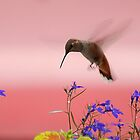 Hummingbird 7 17 09 by Barbara Anderson