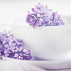 Dream of Lilacs II by AugenBlicke
