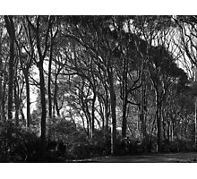 Haunted Haven - Road to Glasshouse Rocks near Narooma, New South Wales Photographic Print