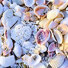 Seashells at Sunset Have Great Colors! by Kim McClain Gregal