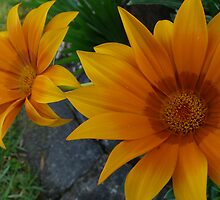 flowers by Dale Gribble