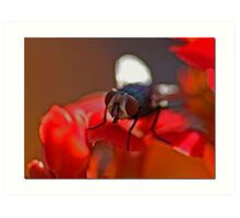 Fly In The Ointment Art Print