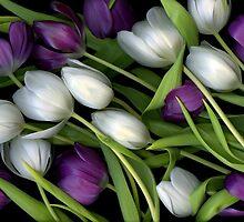 Tulip Medley by scankunst