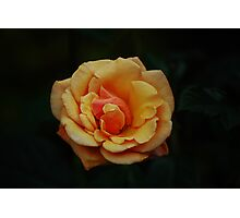 Peach Perfection.... Photographic Print