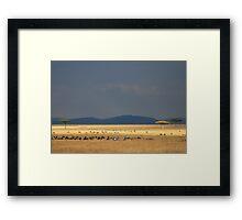 masai mara Framed Print